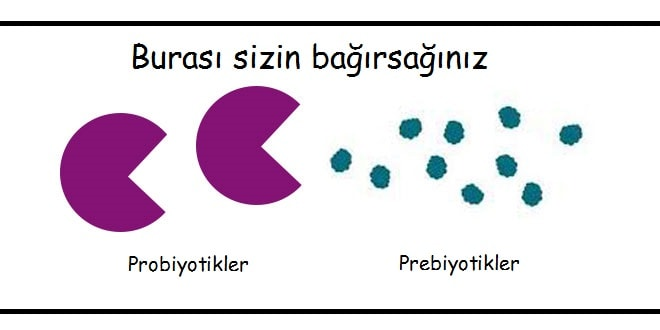 Probiyotik-prebiyotik-arasindaki-fark